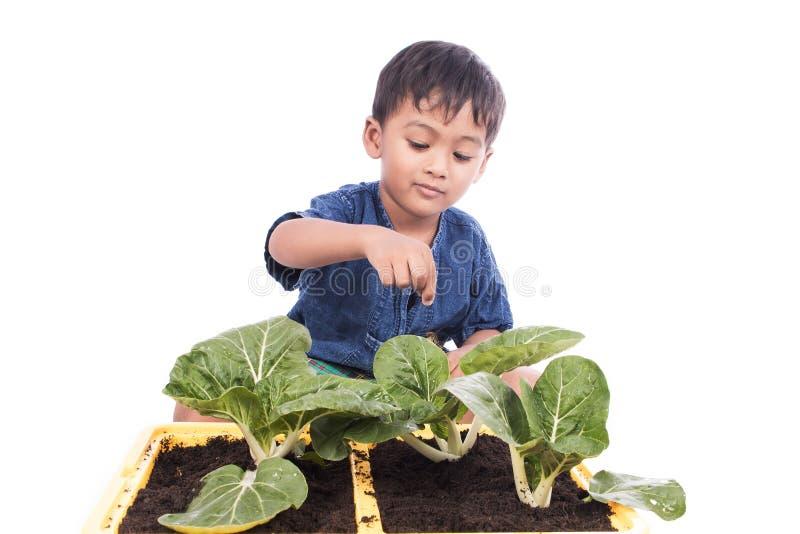 Little boy fertilizer to vegetables in pots stock images