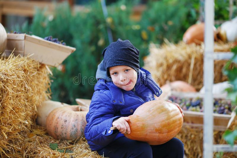 Little boy having fun on a tour of a pumpkin farm at autumn. Child holding the giant pumpkin stock photos