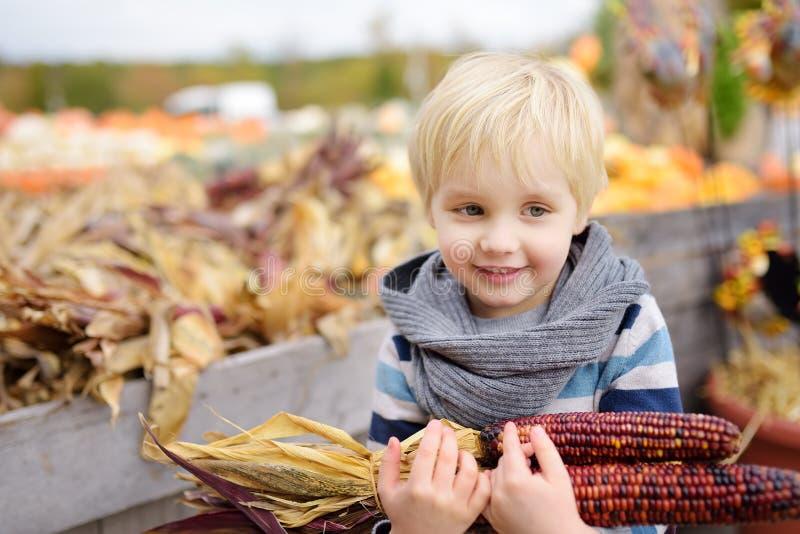 Little boy having fun on a tour of a pumpkin farm at autumn. Child holding indian corn stock image
