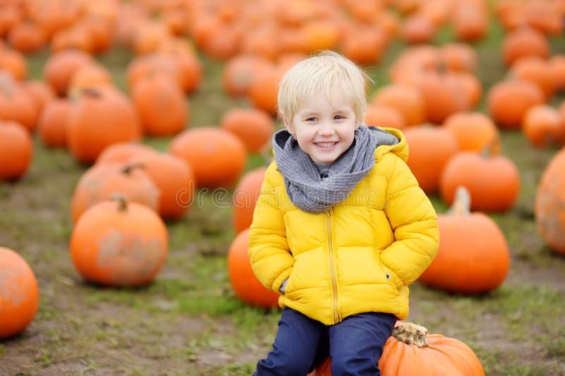 Little boy having fun on a tour of a pumpkin farm at autumn. Child sitting on giant pumpkin stock photos