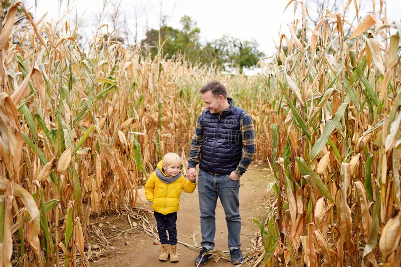 Little boy and his father having fun on pumpkin fair at autumn. Family walking among the dried corn stalks in a corn maze. stock image