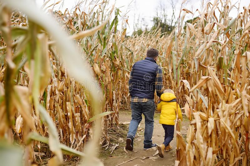 Little boy and his father having fun on pumpkin fair at autumn. Family walking among the dried corn stalks in a corn maze. royalty free stock images