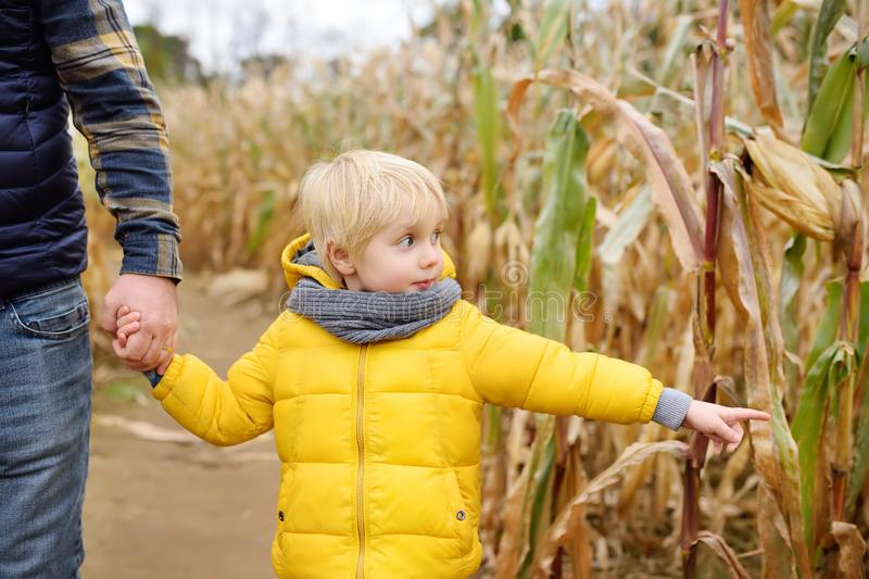Little boy and his father having fun on pumpkin fair at autumn. Family walking among the dried corn stalks in a corn maze. stock photo