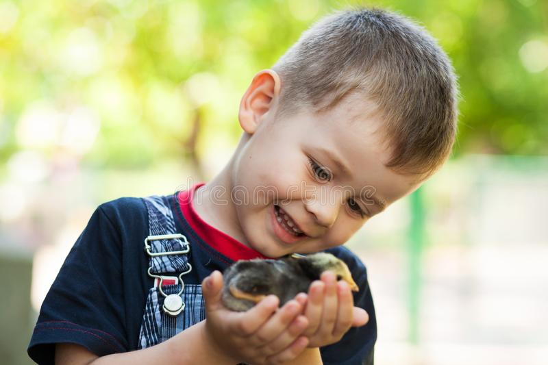 Little boy holding a baby chick on a farm. Concept of happy life. Little boy holding a baby chick on a farm. Portrait of little boy with chick outdoors at the stock photo