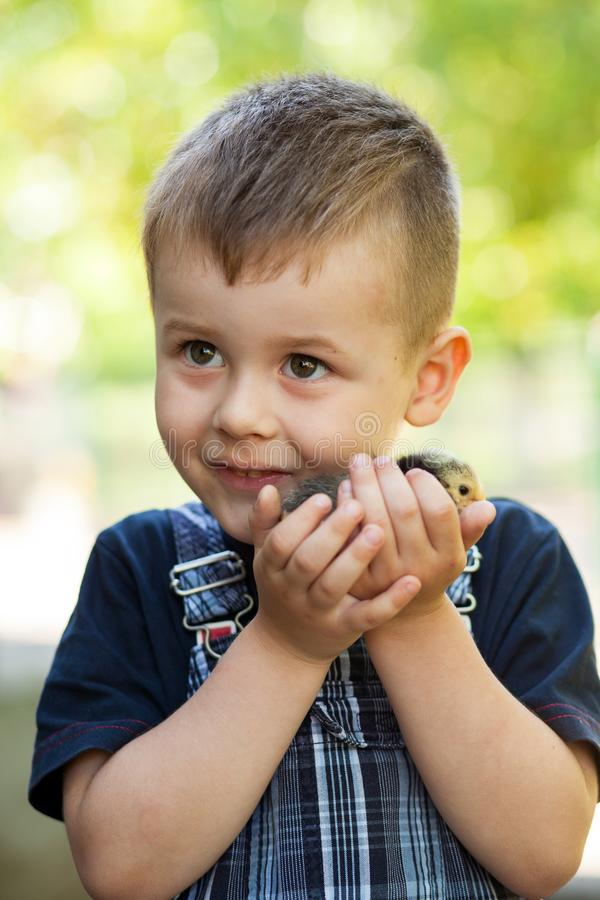 Little boy holding a baby chick on a farm. Concept of happy life. Little boy holding a baby chick on a farm. Portrait of little boy with chick outdoors at the stock photos
