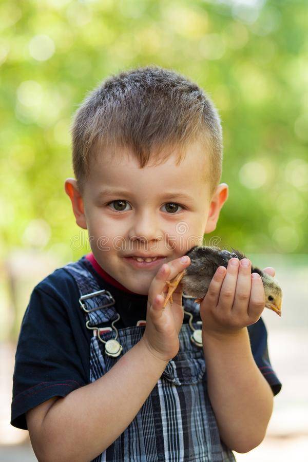 Little boy holding a baby chick on a farm. Concept of happy life. Little boy holding a baby chick on a farm. Portrait of little boy with chick outdoors at the royalty free stock photography