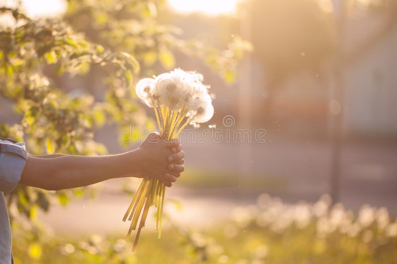Little boy holding in hands bouquet of dandelions on summer sunset. Boy holding in hands bouquet of dandelions on summer sunset royalty free stock photos