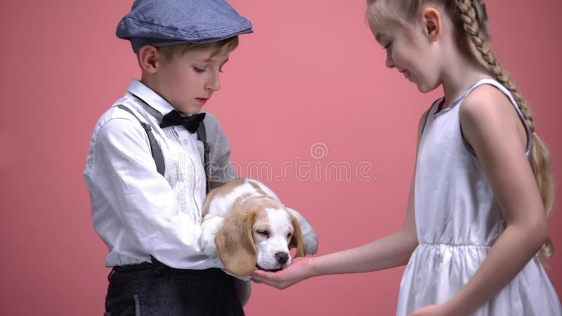 Little boy holding puppy, girl feeding dog from open palm, animals love and care. Stock photo stock photo