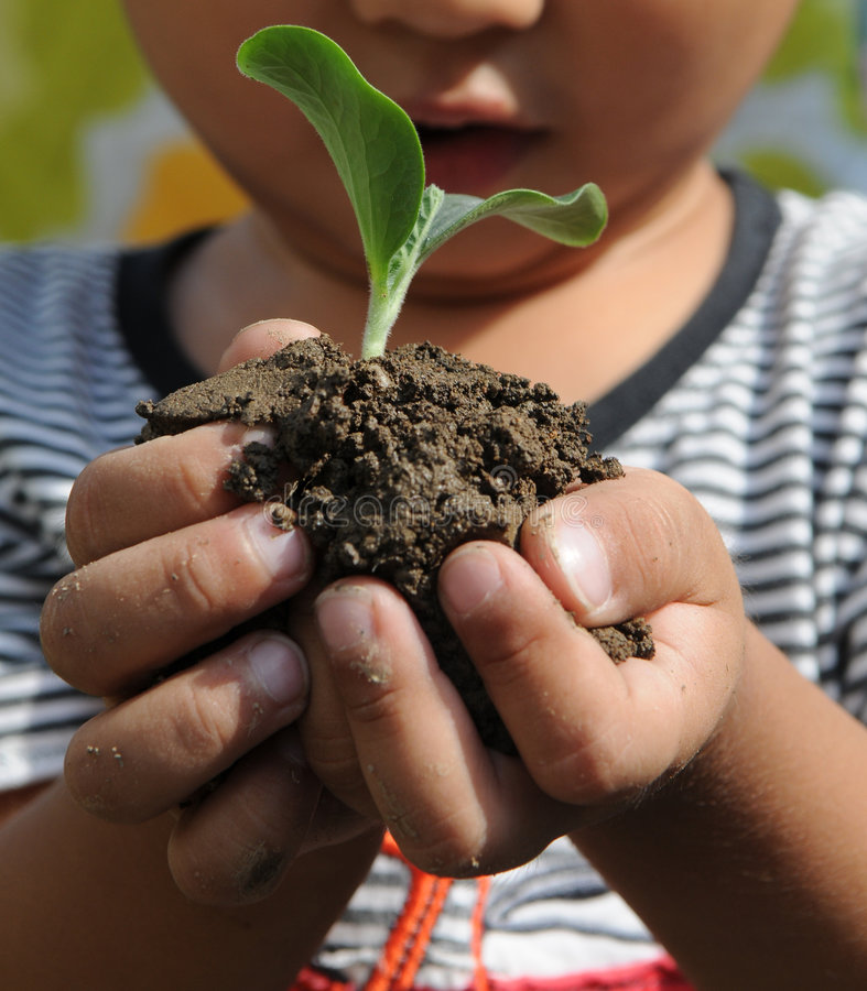 The little boy holding small seedling. A little boy holding a small seedling and black soil in cupped hands royalty free stock photography