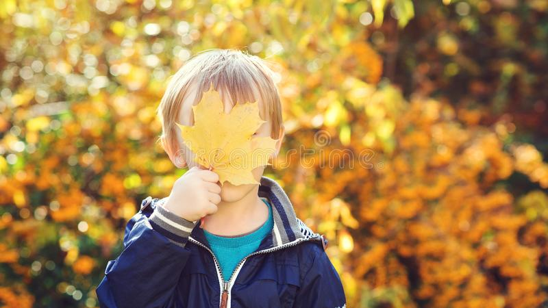 Little boy holds maple leaf outdoors. Autumn time. Kid hides by yellow maple leaf. Happy child playing at fall nature background. royalty free stock image