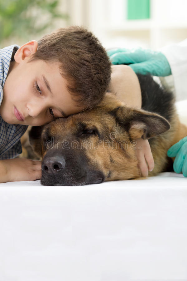 Little boy hugging and caressing his dog at the vet royalty free stock photo