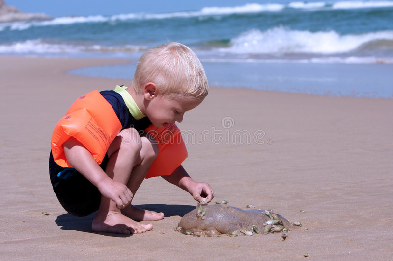 Little boy and jelly-fish. A little boy sits on the beach and looks at a jelly-fish and snails that covered the jelly-fish. The picture was taken on the beach at stock photos