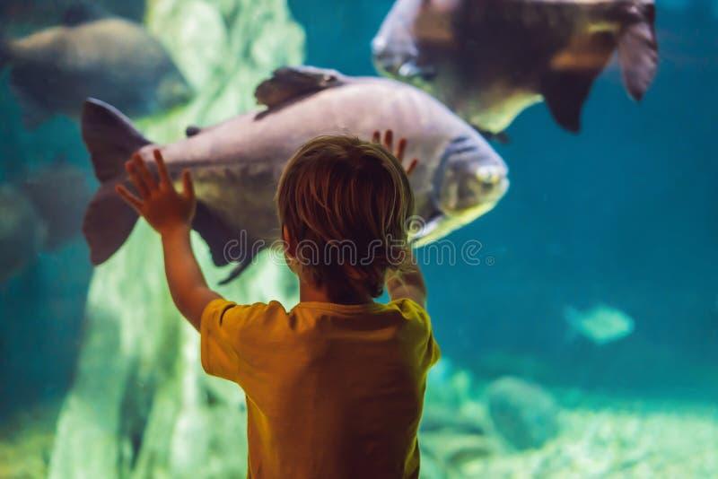 Little boy, kid watching the shoal of fish swimming in oceanarium, children enjoying underwater life in Aquarium.  royalty free stock image