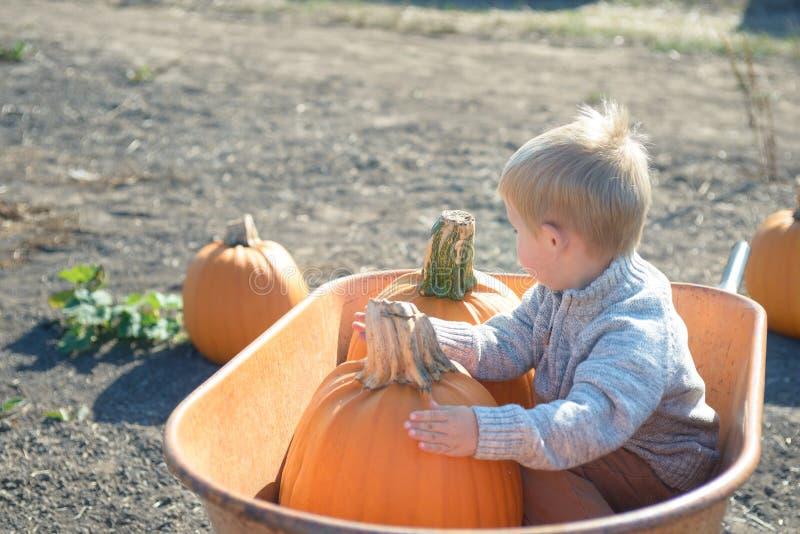 Little boy sitting inside wheelbarrow at field pumpkin patch. Little boy in knitted jacket sitting inside old wheelbarrow at farm field, choosing pumpkin royalty free stock photos