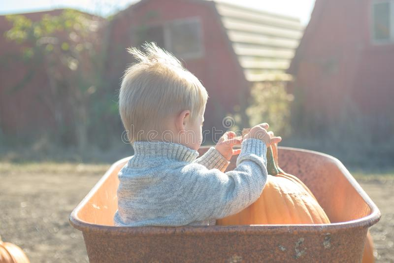 Little boy sitting inside wheelbarrow at field pumpkin patch. Little boy in knitted jacket sitting inside old wheelbarrow at farm field, choosing pumpkin stock photos