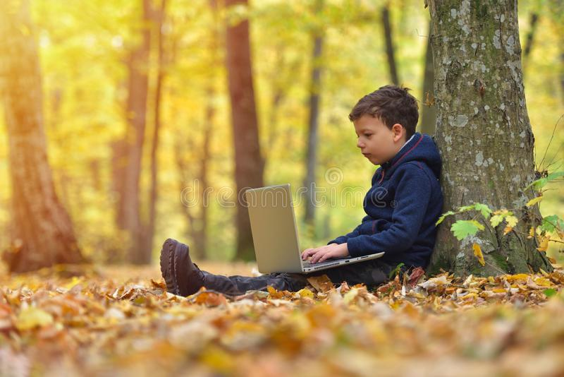 Little boy with laptop in forest, autumn colors, sunset warm light stock photography