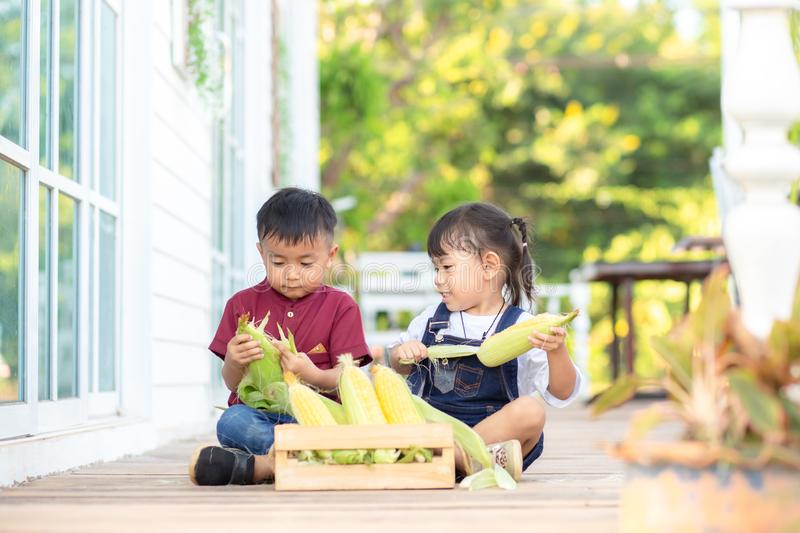 Little boy and little girl help to peel sweet corn, fun stock images