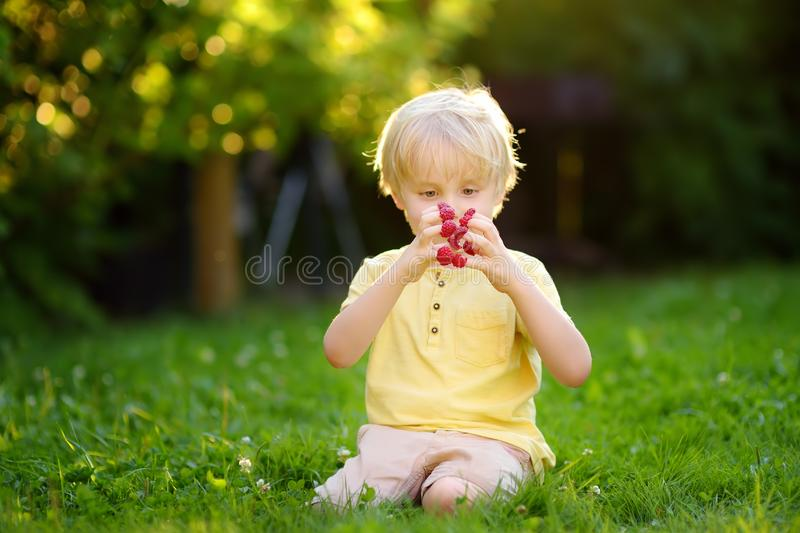 Little boy looks at the raspberries on his fingers sitting at the backyard. Childhood concept stock photography