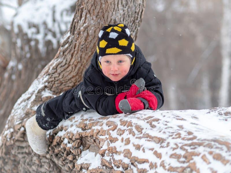 A little boy lying on a large fallen tree in winter royalty free stock photo