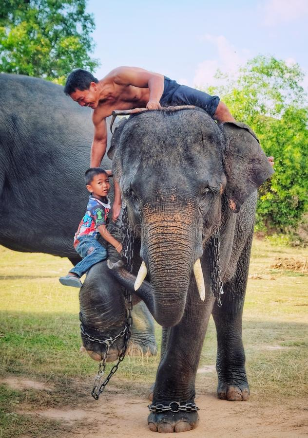 Little boy mahout royalty free stock photos