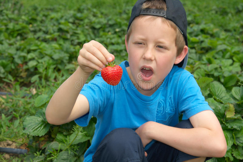 Download Little Boy With Open Mouth Looks At Strawberry Stock Photo - Image: 20058070