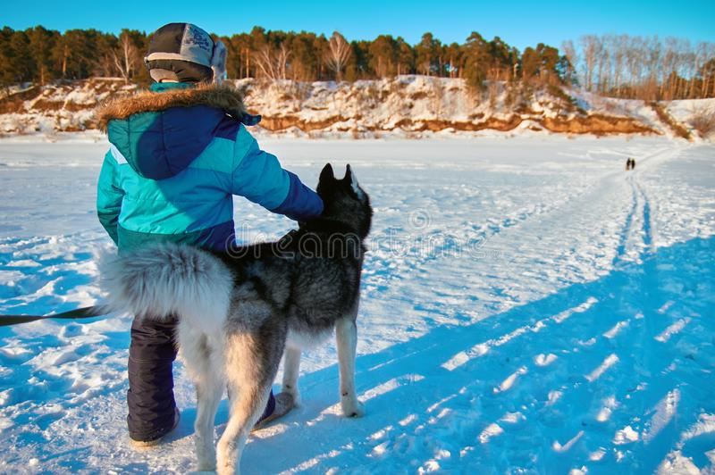 Little boy owner holds dog collar large dog Siberian husky. Rear view, winter, baby in blue jacket. stock photo