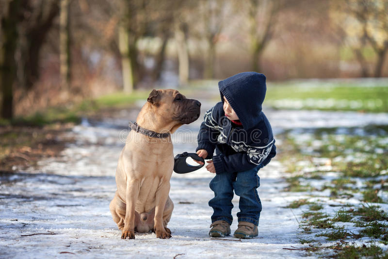 Little boy in the park with his dog friend royalty free stock images