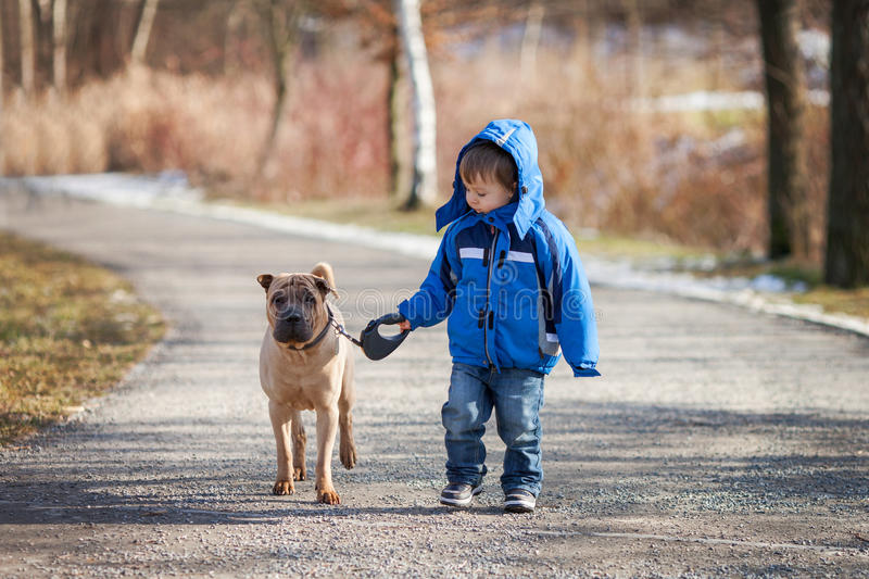 Little boy in the park with his dog friend stock images