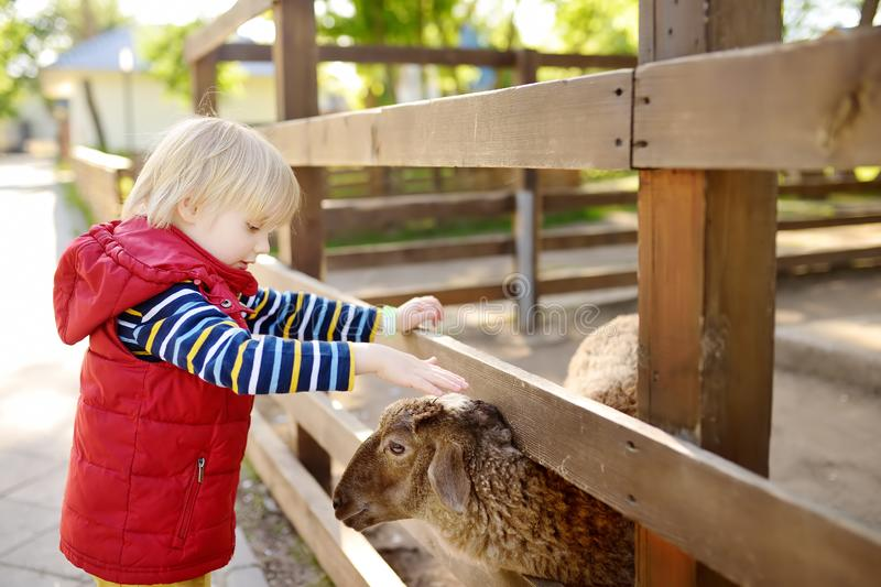 Little boy petting sheep. Child in petting zoo. Kid having fun in farm with animals. Children and animals royalty free stock images