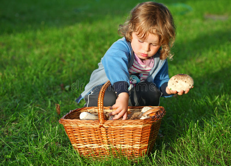 Little boy pick mushrooms in green forest, kids outdoor activities.  royalty free stock photography