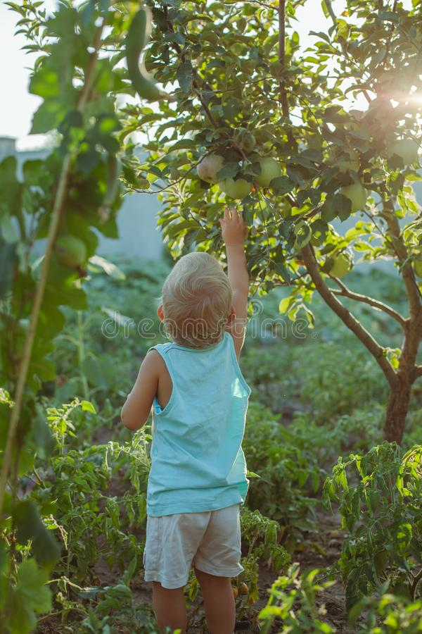 people grow natural food royalty free stock photography