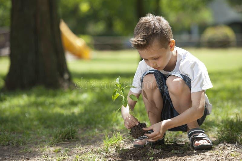 Little boy planting stock photo