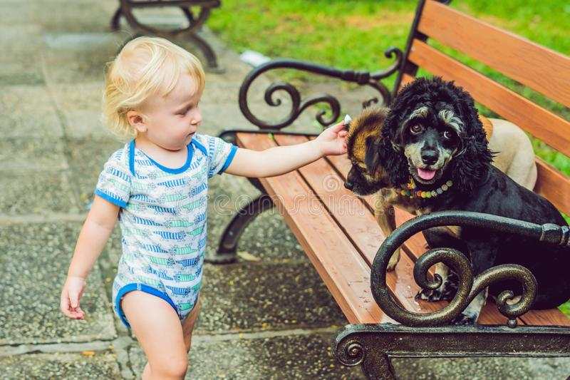 A little boy is playing with little dogs.  stock photos