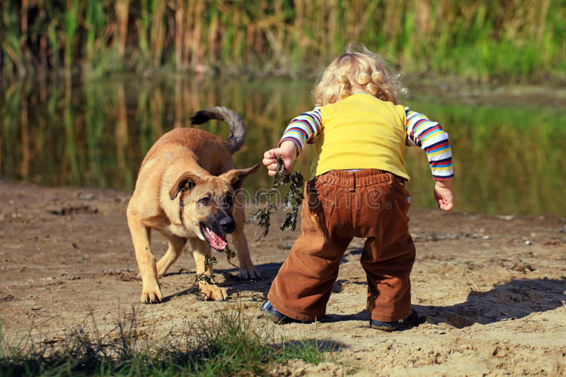 Little boy playing with his dog stock images
