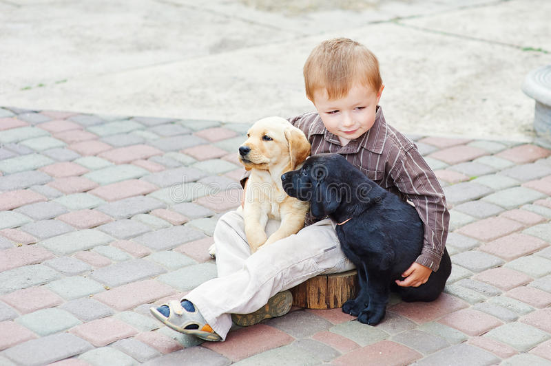 Little boy playing outdoor with a two Labrador puppies.  royalty free stock image