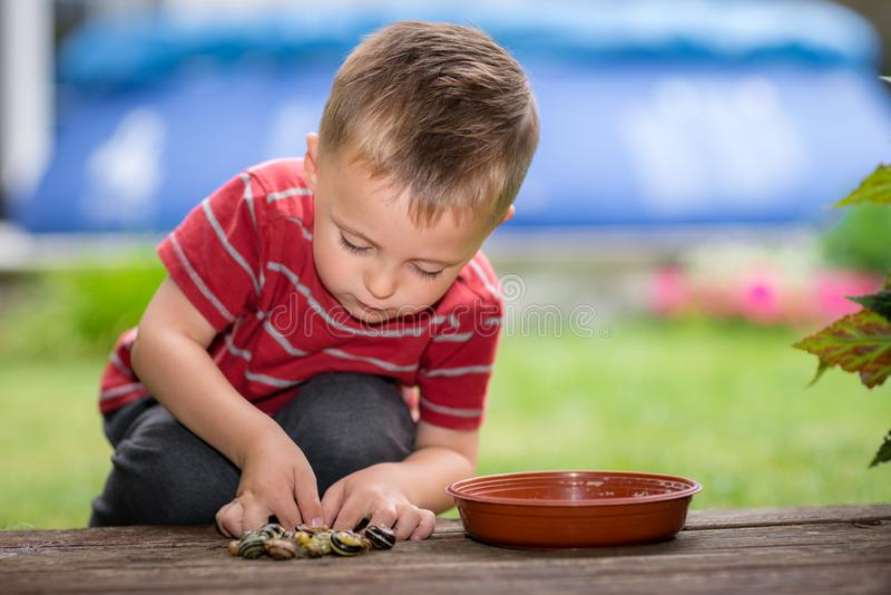 Little boy playing with snails royalty free stock photography