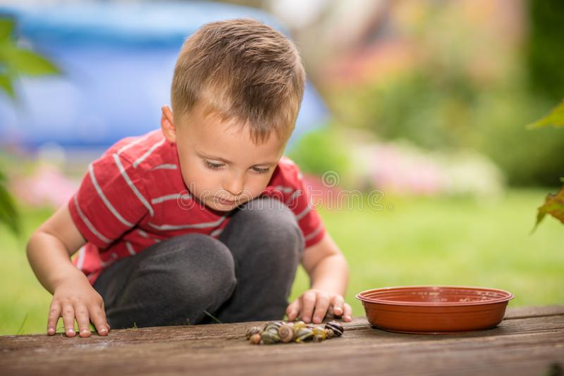 Little boy playing with snails royalty free stock images