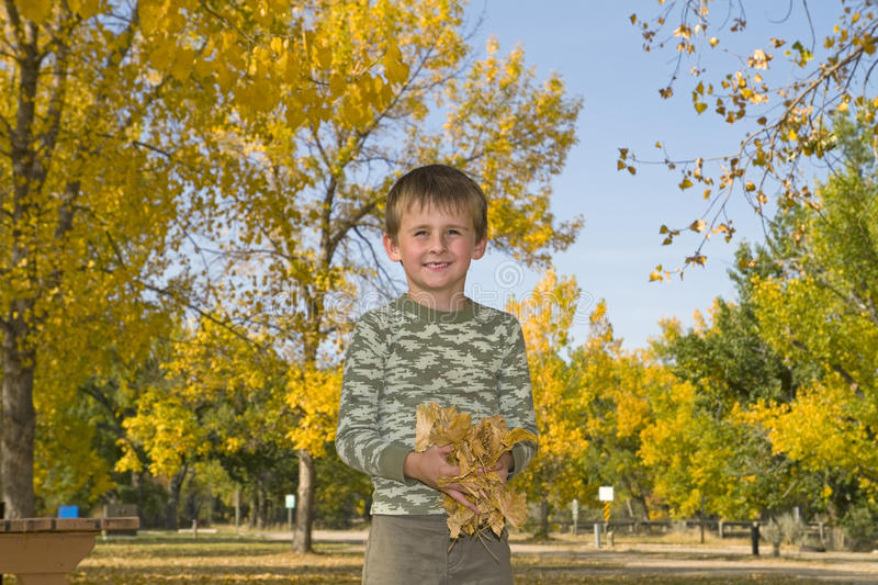 Little Boy Plays With Colorful Leaves In Air Stock Photos
