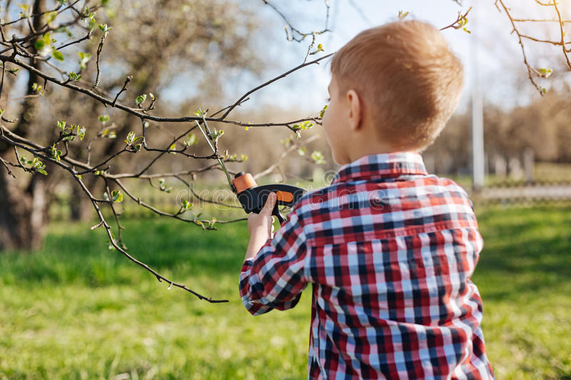 Little boy pruning apple trees. Little environmentalist. School child wearing plaid shirt doing maintenance work by pruning trees with secateurs royalty free stock image