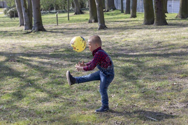 Little Boy que juega la bola en el césped El niño acaba de aprender caminar coge la bola Juegos al aire libre afuera fotos de archivo