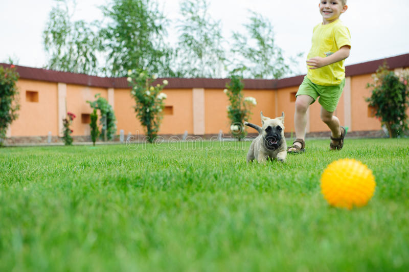 Little boy is racing with his dog stock photography