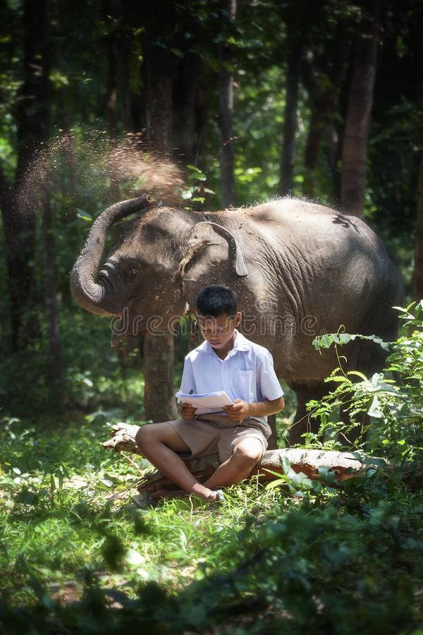 Little boy reading a book with a little elephant playing under the tree royalty free stock photography