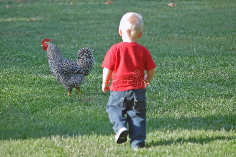 Little boy and rooster royalty free stock photography