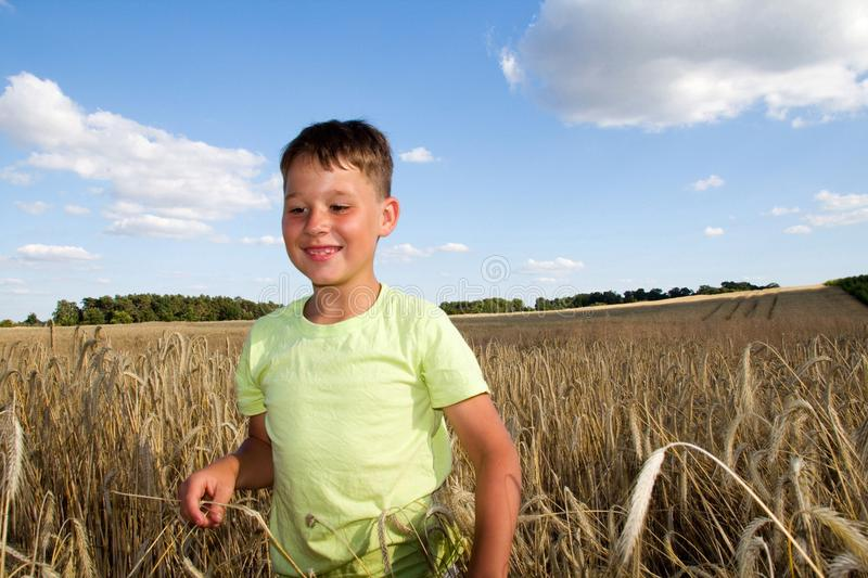 Little boy in a cornfield royalty free stock image