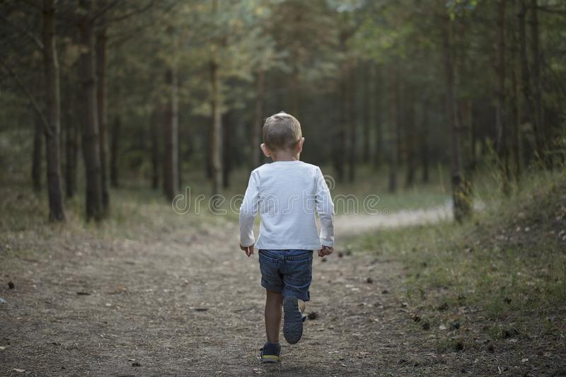 Little boy running in a pine forest. A little boy runs from the camera along the path in a pine forest on a sunny day stock images