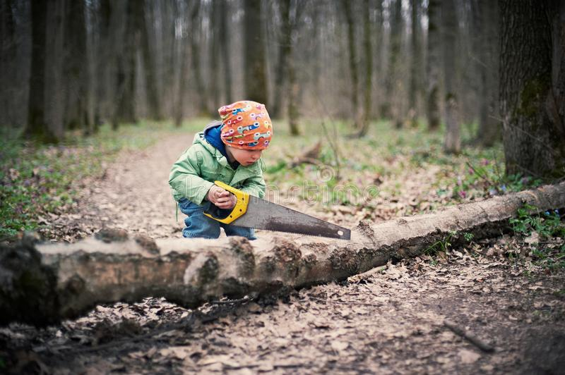 Little boy sawing a fallen tree in the forest. At the spring time royalty free stock images