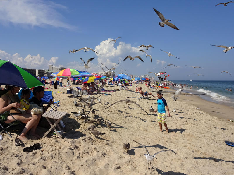 Little Boy and Seagulls. Photo of boy and seagulls at the beach in ocean city maryland on 8/17/16. Record heat had many people flocking to the seashore to cool stock photography