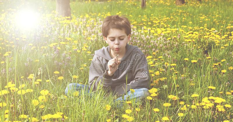 Little boy seated in a meadow blowing on a flower royalty free stock photos