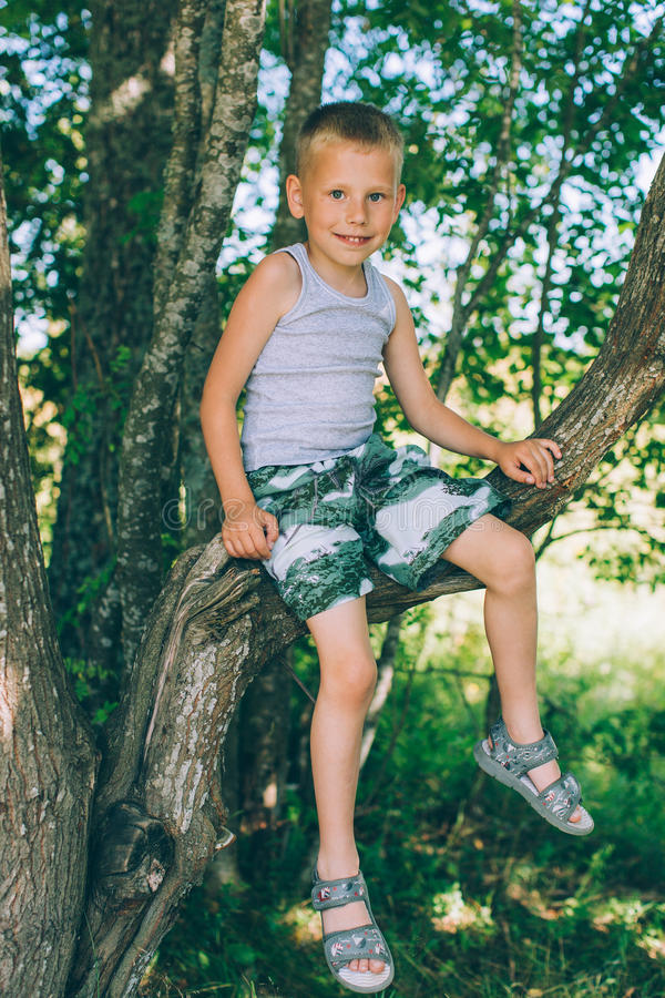 little boy in shorts sitting up a tree stock image image