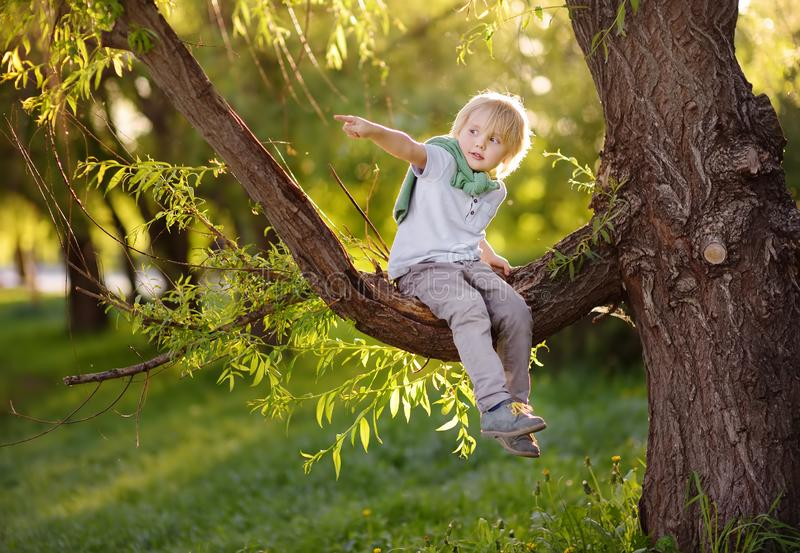 Little boy sits on a branch of a big tree and points with his finger. Child`s games. Active family time on nature. Hiking with royalty free stock photos